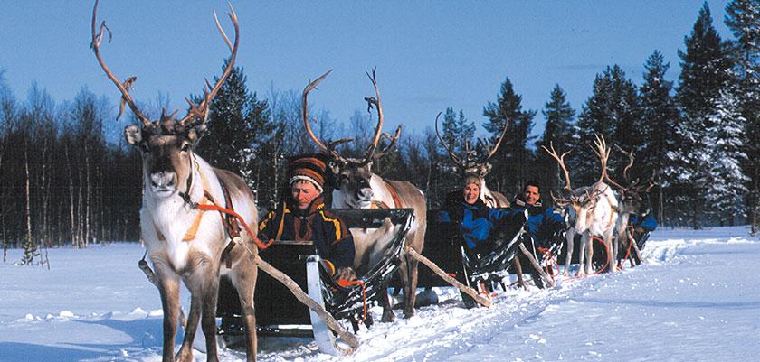 finland_lapland_saariselka_reindeer-safari3.jpg